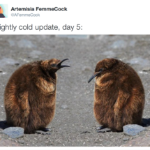 fluffy brown penguins